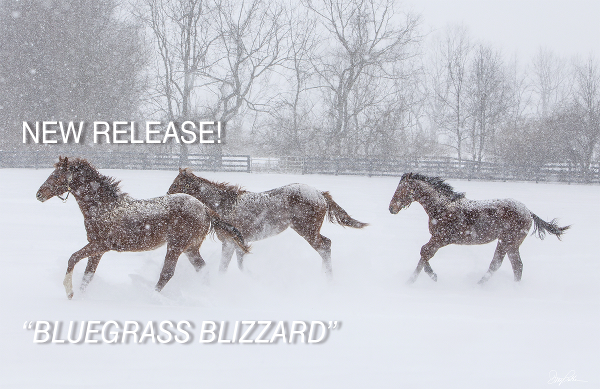 BLUEGRASS BLIZZARD