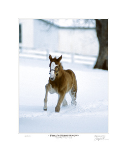 Foal's First Snow