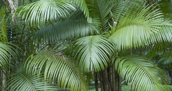Palm Grove Detail