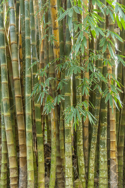 Bamboo Grove Detail