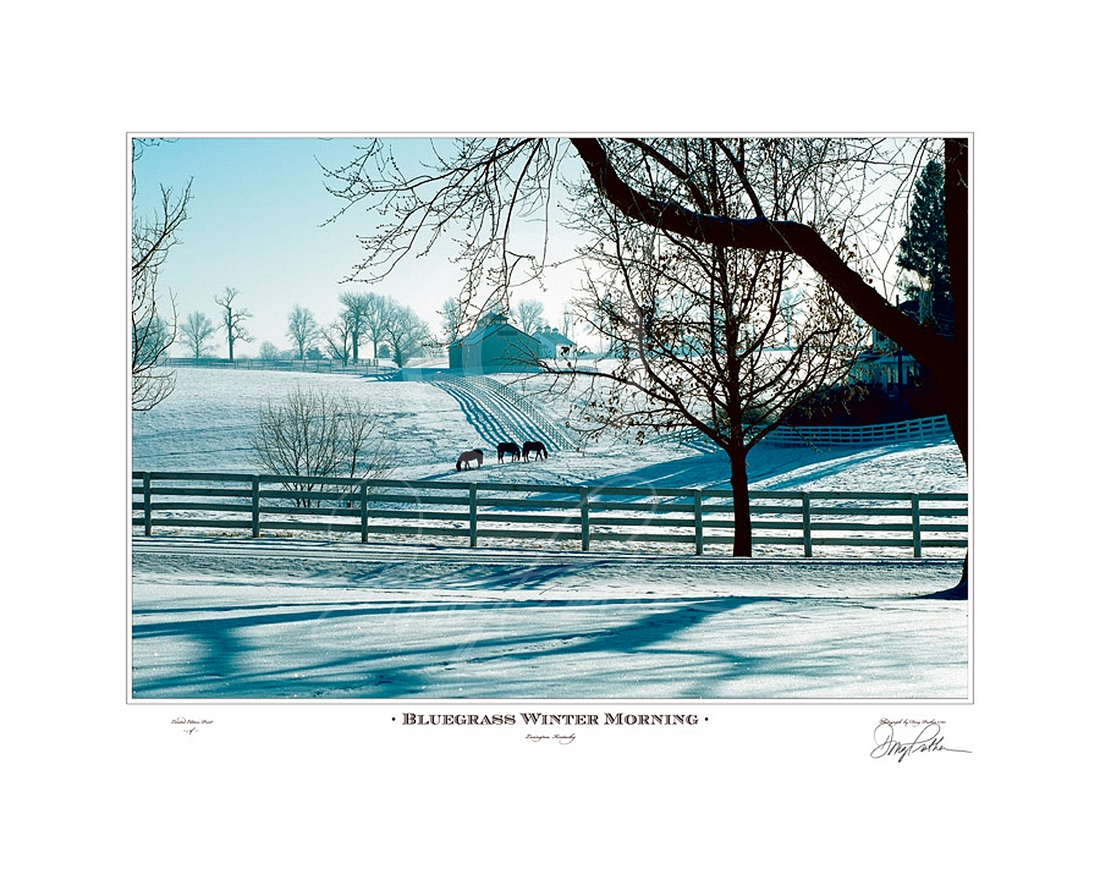 Bluegrass Winter Morning, a fine art horse print. A cold, crisp day cast a blue light while Thoroughbred fillies graze through the freshly fallen snow on Calumet Farm, Lexington, Ky. Photograph by Doug Prather