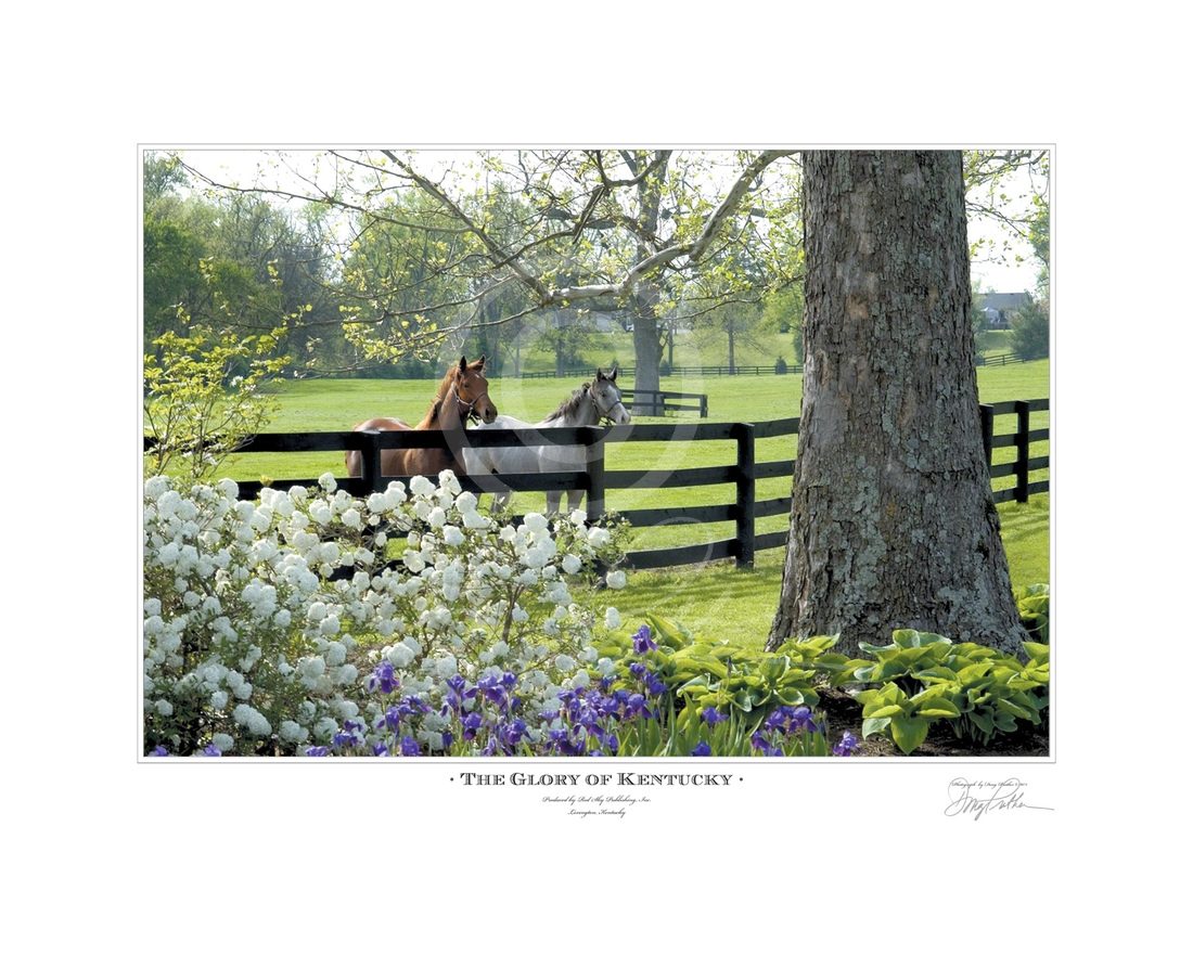 The Glory Of Kentucky A Fine Art Horse Print Yearling