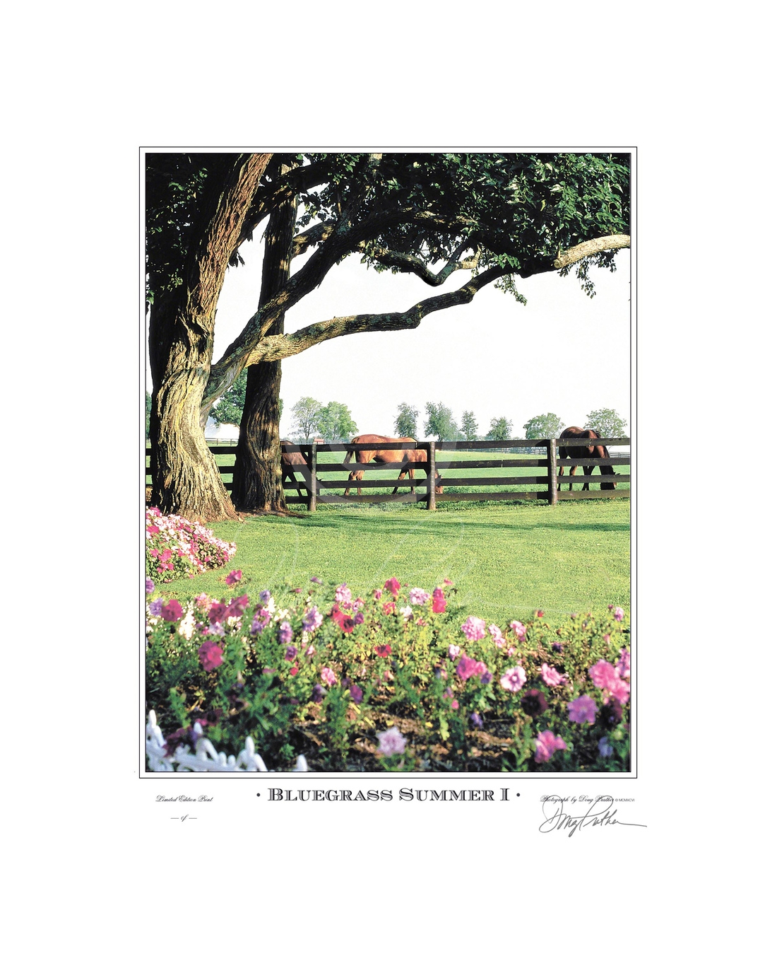 Bluegrass Summer I, a fine art horse print. A lush scene intertwining summer flowers, horses, trees and fences into a beautiful pastoral scene on Green Gates Farm, Ironworks Pike, Lexington, Ky. This was also the former Spendthrift and Elmendorf Farms. Ph