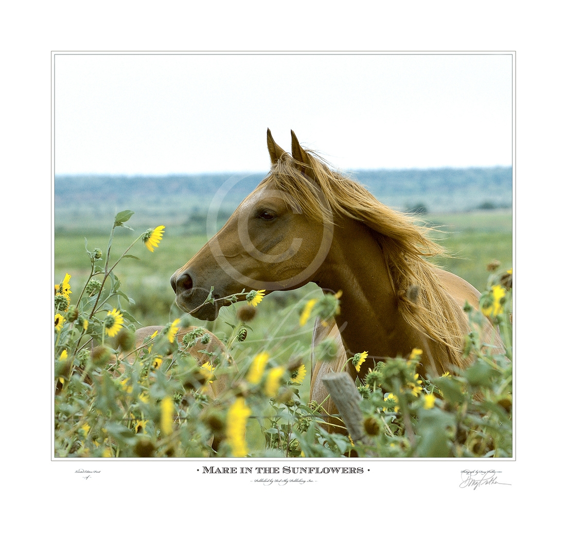 Mare in the Sunflowers