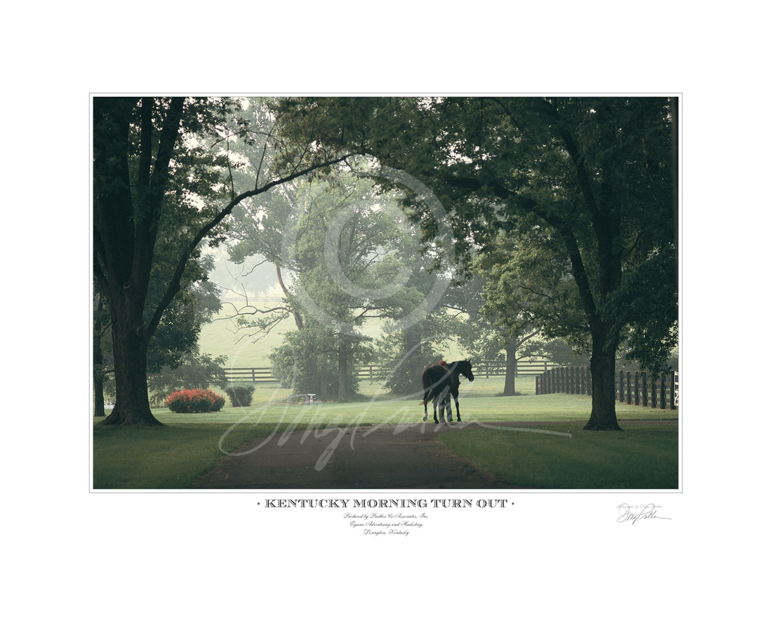 Kentucky Morning Turnout; fine art; horse print; photograph; Thoroughbred; stallion; Stop the Music; hot; humid; July; summer; morning; Greentree Stud; Gainesway Farm; Paris Pike; Lexington; KY;  scene; reflection; © Doug Prather