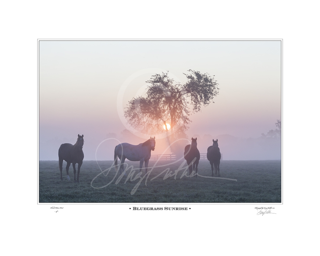 Bluegrass Sunrise, a fine art horse print by Doug Prather. Curious Thoroughbred mares stare as the sun rises through the fog on a crisp fall morning on WinStar horse Farm, near Versailles, KY.