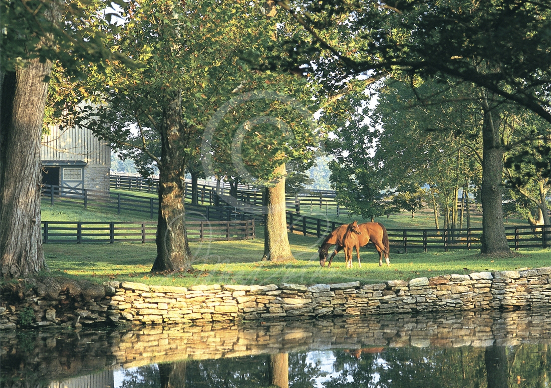 A New Beginning, a Thoroughbred horse art print. On a Bluegrass fall morning a mare & her foal graze in front of the famous pond on WinStar horse Farm, Versailles, KY. Photographed by Doug Prather