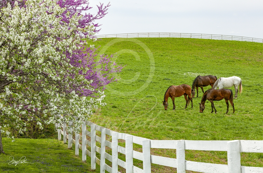Blooming In The Bluegrass