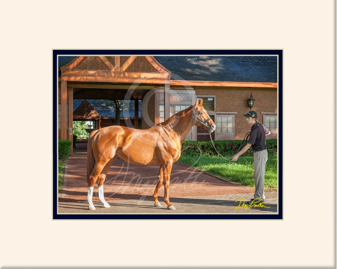 Curlin at Sunrise, a Thoroughbred horse fine art print by Doug Prather. The classic-winning Horse-of-the year & leading sire, Curlin, strikes a pose near the breezeway of his stallion barn. Lit up by the early morning sun, The copper lining seems to match